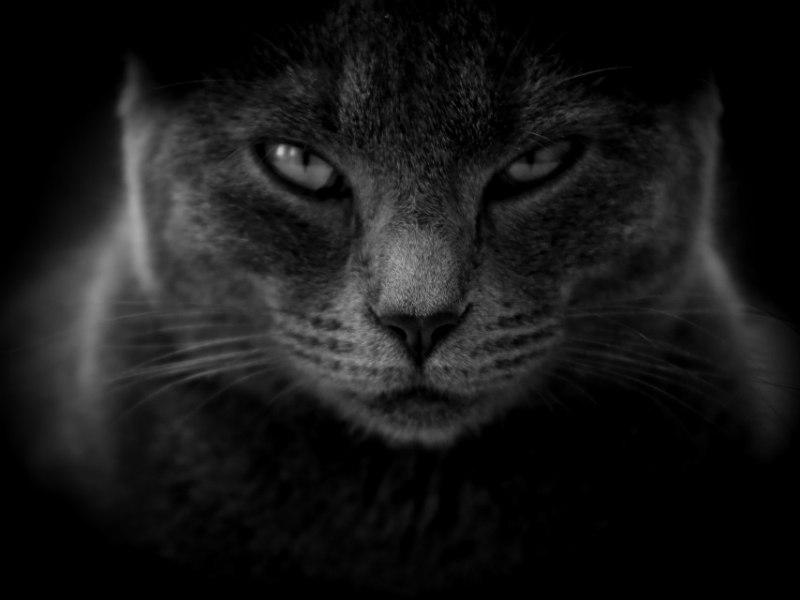 kat kastration