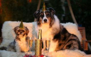 hunde der fejrer nytårsaften