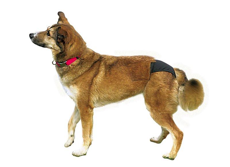 Hund med løbetids-buks fra trixie