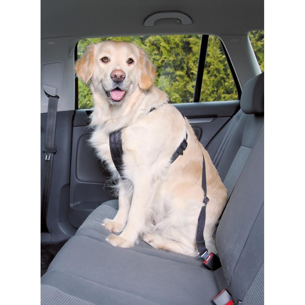 Hund med sikkerhedssele i bil.