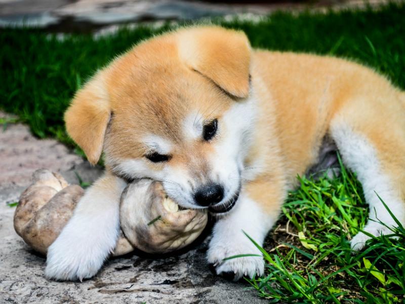 hunde hvalp med ben