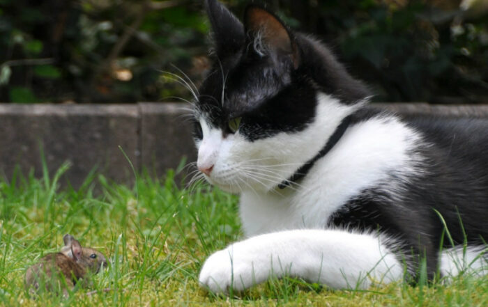 katte der spiser mus, kan få lungeorm. Image by Erika Stockenhofen from Pixabay